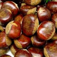 Chestnut Manufacturers