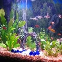 Tropical Aquariums Manufacturers