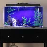 Acrylic Aquarium Manufacturers