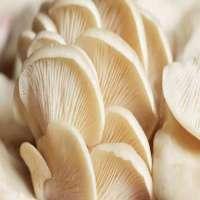 平菇 制造商