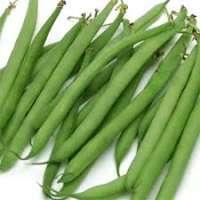 法国豆 制造商