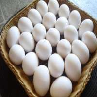 白色被轰击的鸡蛋 制造商