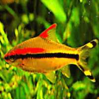 Live Tropical Fish Manufacturers