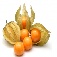 Peruvian Groundcherry Manufacturers