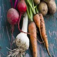 Root Vegetables Manufacturers