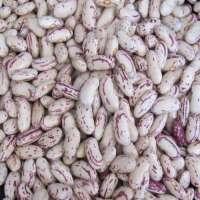 Speckled Kidney Bean Manufacturers
