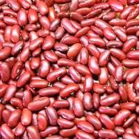 红芸豆 制造商