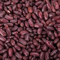 黑芸豆 制造商