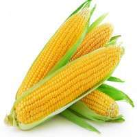 Sweet Corn Manufacturers