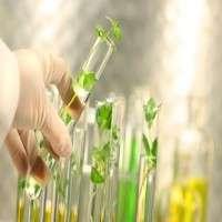 植物萃取物 制造商