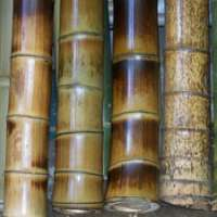 Polished Bamboo Sticks Manufacturers