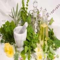 标准化的植物提取物 制造商