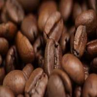 可可咖啡豆 制造商