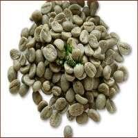 未加工的咖啡豆 制造商