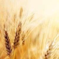 农产品 制造商