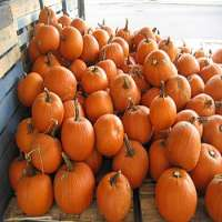 Pumpkin Manufacturers
