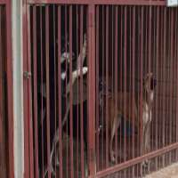 Animal Care Centres Manufacturers