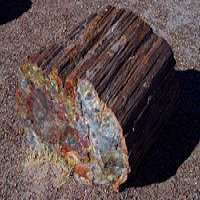 Petrified Wood Manufacturers