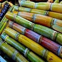Sugarcane Manufacturers