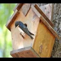 Wooden Bird House Manufacturers