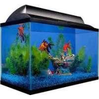 Fish Aquarium Manufacturers