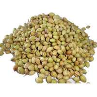 Coriander Seed Manufacturers
