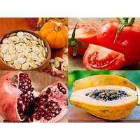 Fruit Seeds Manufacturers