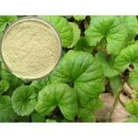 Centella Asiatica提取物 制造商