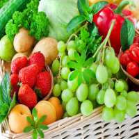 食物酶 制造商