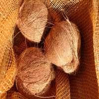 半熟的椰子
