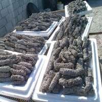 Sea Cucumber Dried