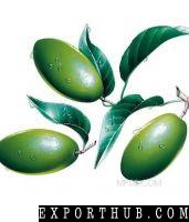天然保健品橄榄叶提取物粉末