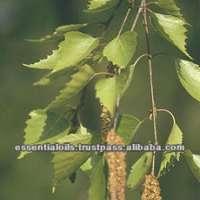 桦树焦油油