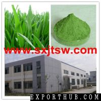 Wheat Grass Powder